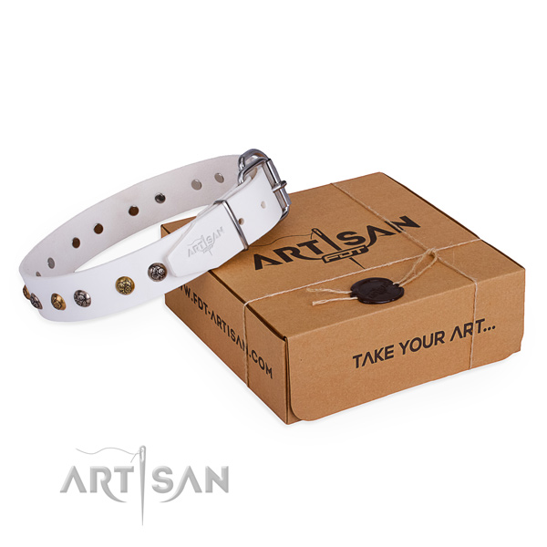 Everyday use dog collar with Extraordinary reliable adornments