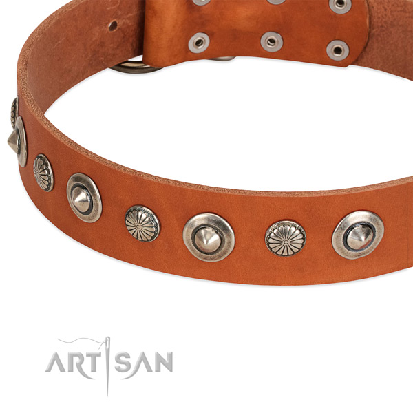 Exquisite studded dog collar of finest quality natural leather