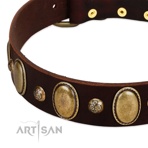 Genuine leather dog collar with impressive embellishments