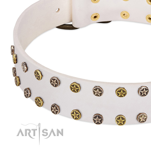 Significant studs on natural leather collar for your pet