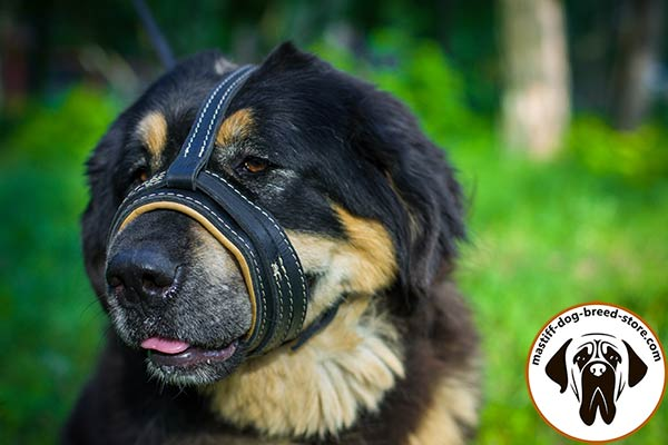 Free-breathing leather Mastiff muzzle