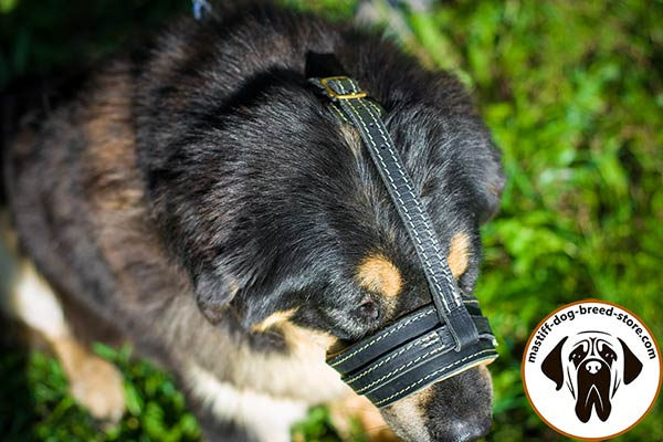 Easy-to-use leather Mastiff muzzle with adjustable straps