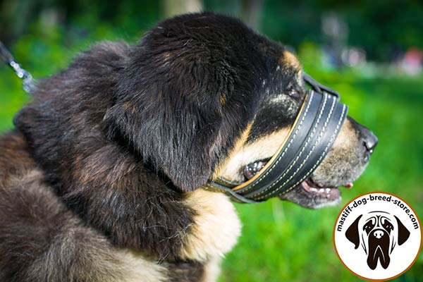 Stitched and riveted leather dog muzzle for Mastiff