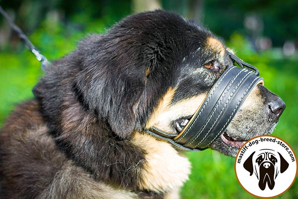 Soft leather dog muzzle for Mastiff with padding