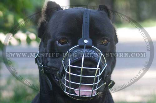 Walking Mastiff Dog Muzzle for Mastiffs