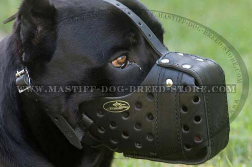 Mastiff Leather Muzzle for Walking and Training