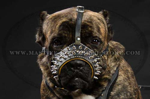 Nappa Padded Leather Muzzle for Mastiff Breed Dogs Walking