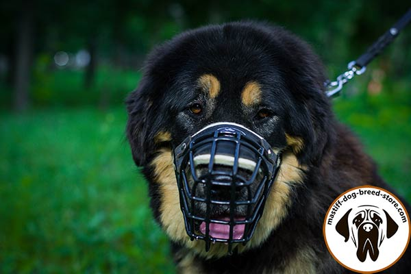 Sturdy metal cage dog muzzle for Mastiff with comfy padding
