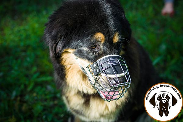 Comfortable snugly fitted metal cage dog muzzle for Mastiff