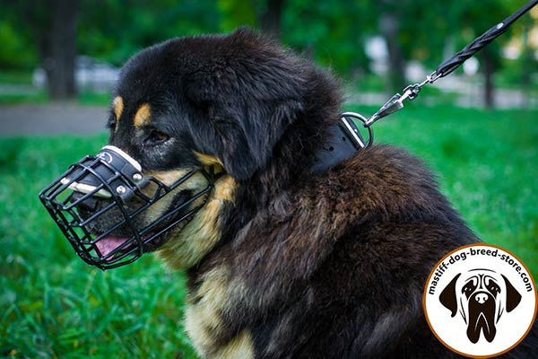 Special-rubber-covered metal wire cage dog muzzle for Mastiff winter walking