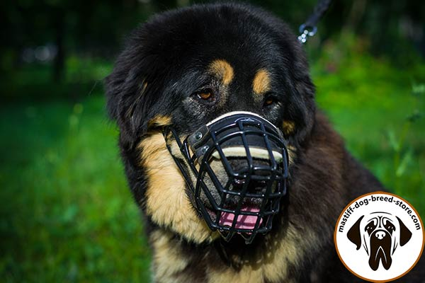 Sturdy wire cage dog muzzle for Mastiff with nose padding