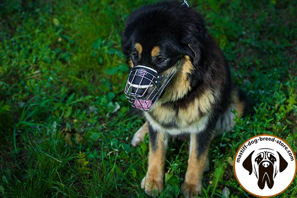 Wire dog muzzle for Mastiff with good air flow