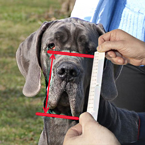 How to measure your dog's snout height