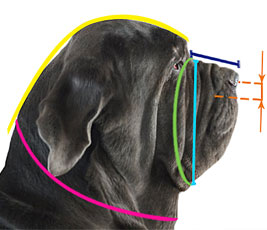 Measure your dog properly